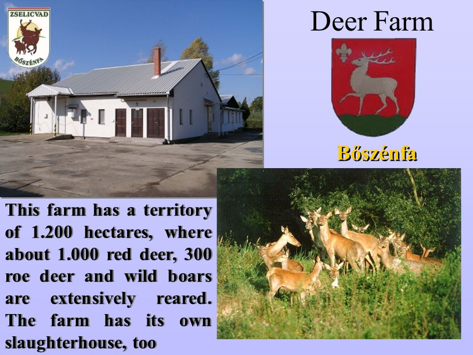 Deer Farm Bőszénfa This farm has a territory of 1.200 hectares, where about 1.000 red deer, 300 roe deer and wild boars are extensively reared.