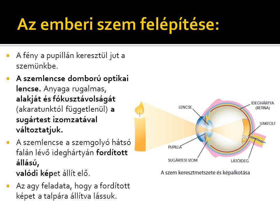  A fény a pupillán keresztül jut a szemünkbe.  A szemlencse domború optikai lencse.