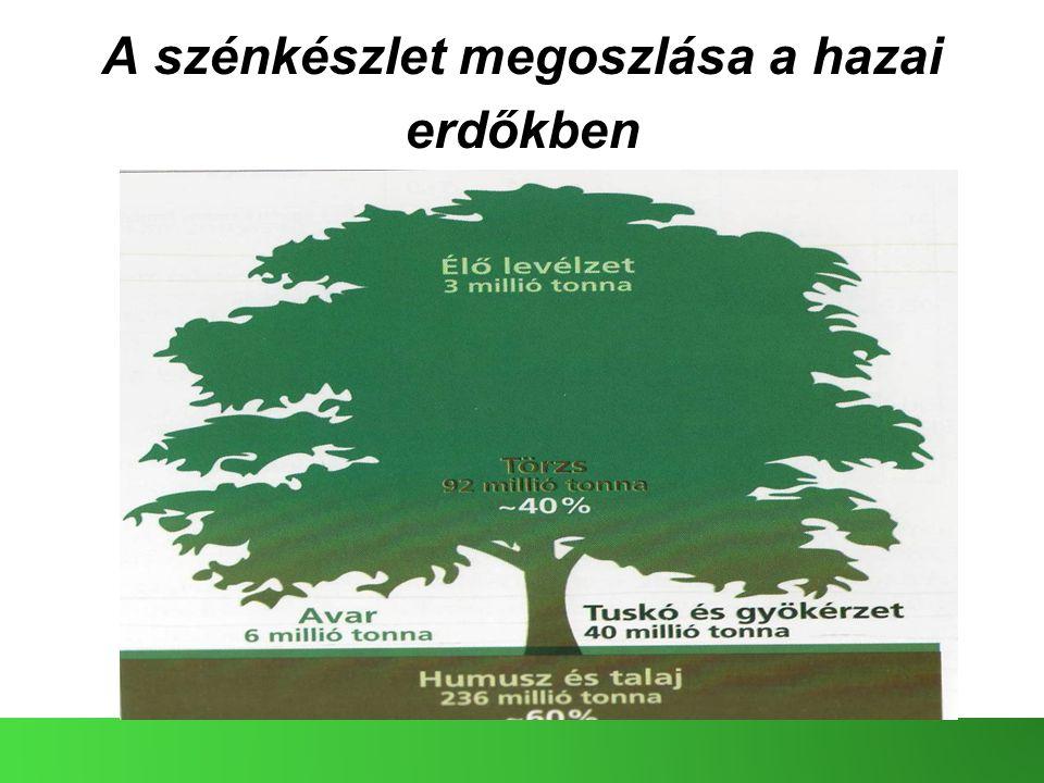 A szénkészlet megoszlása a hazai erdőkben