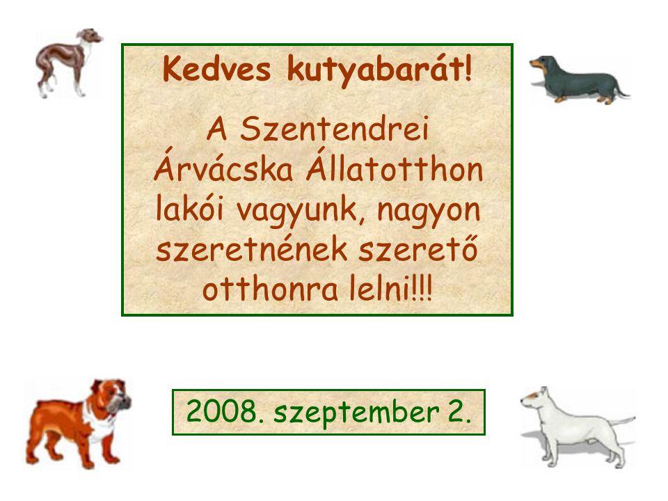 Kedves kutyabarát! A Szentendrei Árvácska Állatotthon lakói vagyunk, nagyon szeretnének szerető otthonra lelni!!! 2008. szeptember 2.