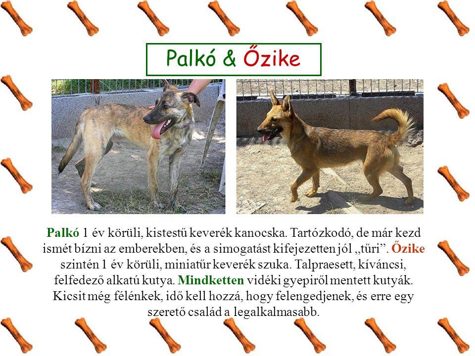 """Palkó & Őzike Palkó 1 év körüli, kistestű keverék kanocska. Tartózkodó, de már kezd ismét bízni az emberekben, és a simogatást kifejezetten jól """"tűri"""""""