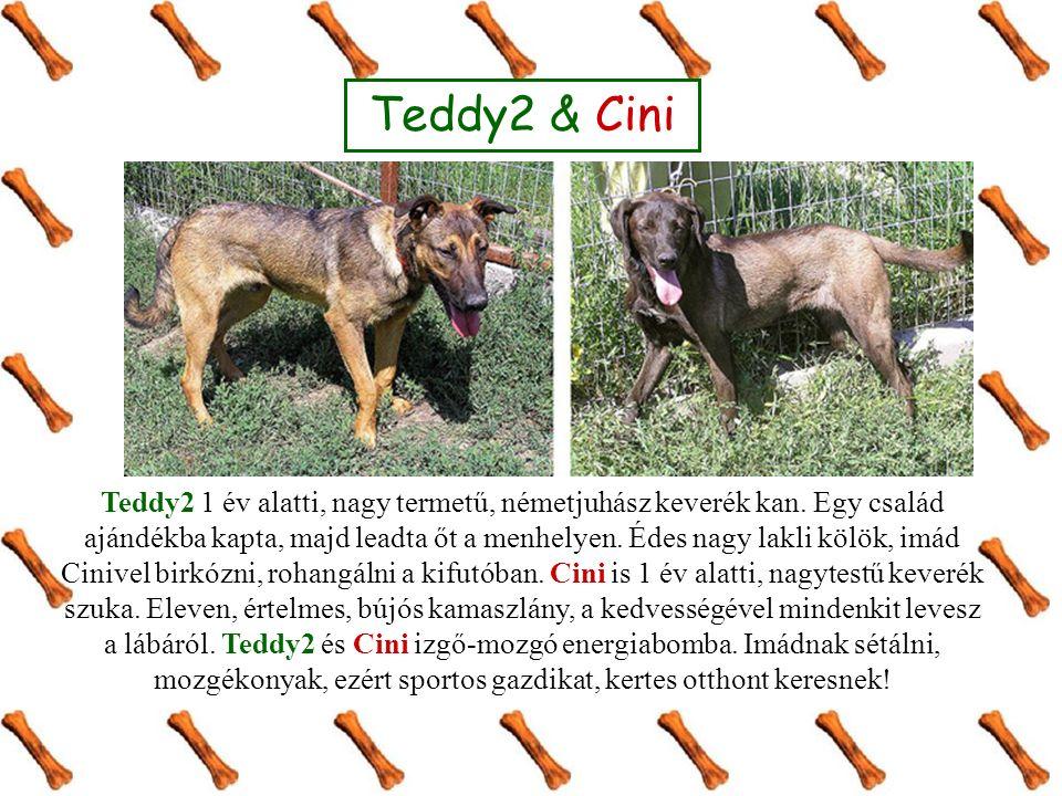Teddy2 & Cini Teddy2 1 év alatti, nagy termetű, németjuhász keverék kan. Egy család ajándékba kapta, majd leadta őt a menhelyen. Édes nagy lakli kölök
