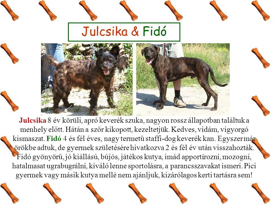 Julcsika & Fidó Julcsika 8 év körüli, apró keverék szuka, nagyon rossz állapotban találtuk a menhely előtt. Hátán a szőr kikopott, kezeltetjük. Kedves