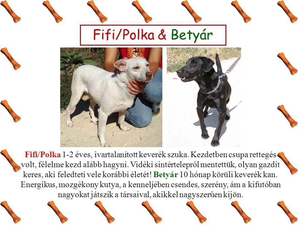 Fifi/Polka & Betyár Fifi/Polka 1-2 éves, ivartalanított keverék szuka. Kezdetben csupa rettegés volt, félelme kezd alább hagyni. Vidéki sintértelepről