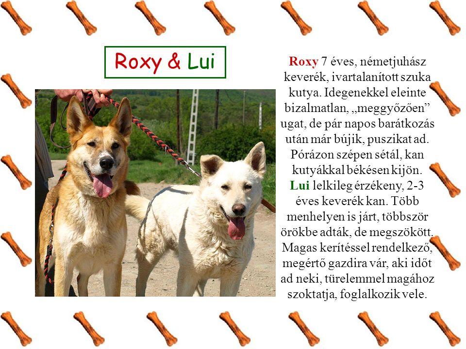 """Roxy & Lui Roxy 7 éves, németjuhász keverék, ivartalanított szuka kutya. Idegenekkel eleinte bizalmatlan, """"meggyőzően"""" ugat, de pár napos barátkozás u"""