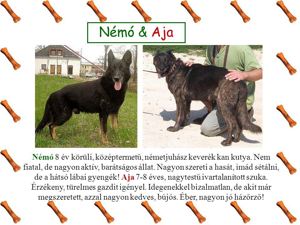 Némó & Aja Némó 8 év körüli, középtermetű, németjuhász keverék kan kutya. Nem fiatal, de nagyon aktív, barátságos állat. Nagyon szereti a hasát, imád