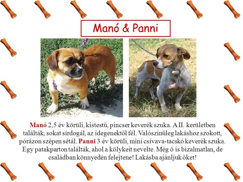 Manó & Panni Manó 2,5 év körüli, kistestű, pincser keverék szuka. A II. kerületben találták, sokat sírdogál, az idegenektől fél. Valószínűleg lakáshoz