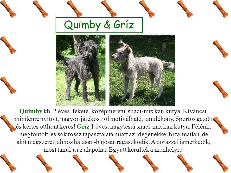 Quimby kb. 2 éves, fekete, középméretű, snaci-mix kan kutya. Kíváncsi, mindenre nyitott, nagyon játékos, jól motiválható, tanulékony. Sportos gazdit é