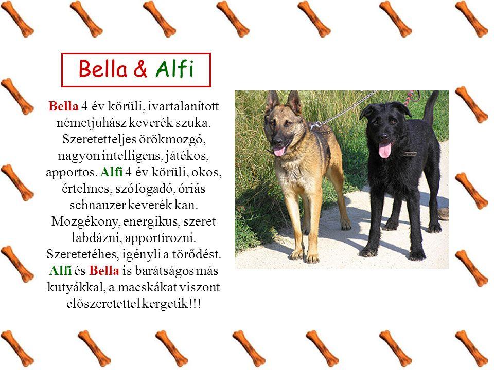 Bella & Alfi Bella 4 év körüli, ivartalanított németjuhász keverék szuka. Szeretetteljes örökmozgó, nagyon intelligens, játékos, apportos. Alfi 4 év k
