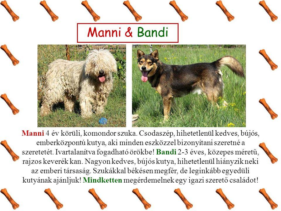 Manni & Bandi Manni 4 év körüli, komondor szuka. Csodaszép, hihetetlenül kedves, bújós, emberközpontú kutya, aki minden eszközzel bizonyítani szeretné