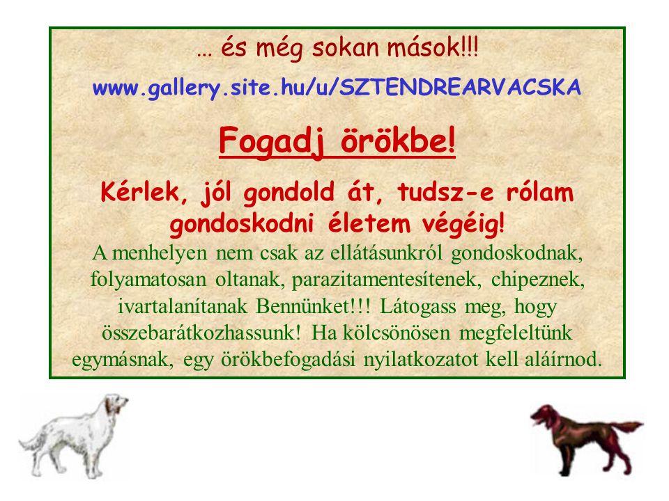 … és még sokan mások!!! www.gallery.site.hu/u/SZTENDREARVACSKA Fogadj örökbe! Kérlek, jól gondold át, tudsz-e rólam gondoskodni életem végéig! A menhe