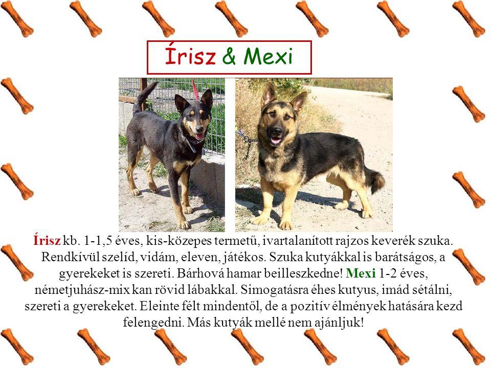 Írisz & Mexi Írisz kb. 1-1,5 éves, kis-közepes termetű, ivartalanított rajzos keverék szuka. Rendkívül szelíd, vidám, eleven, játékos. Szuka kutyákkal