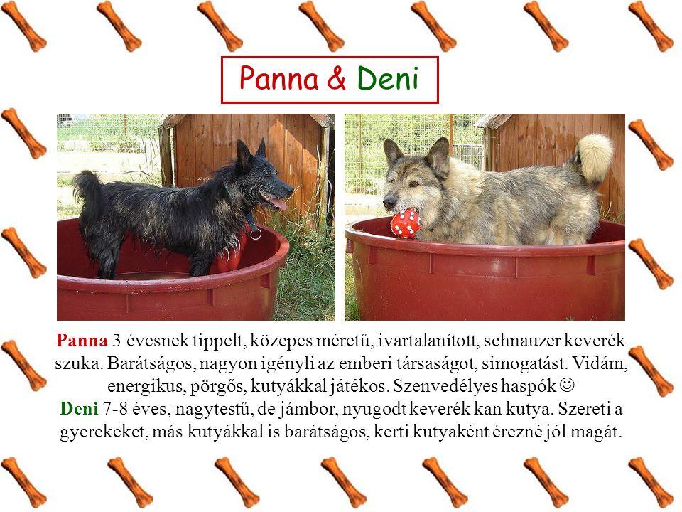 Panna & Deni Panna 3 évesnek tippelt, közepes méretű, ivartalanított, schnauzer keverék szuka. Barátságos, nagyon igényli az emberi társaságot, simoga