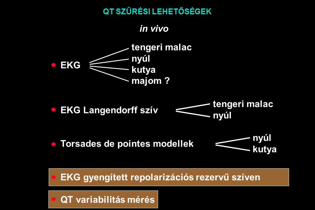 EKG EKG Langendorff szív Torsades de pointes modellek EKG gyengített repolarizációs rezervű szíven QT variabilitás mérés tengeri malac nyúl kutya majom .