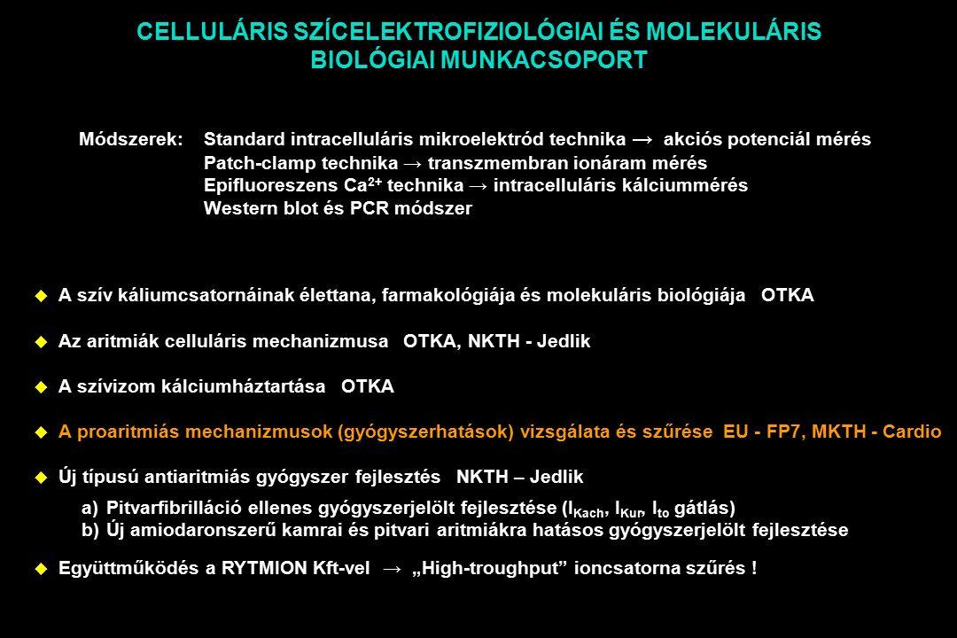 """CELLULÁRIS SZÍCELEKTROFIZIOLÓGIAI ÉS MOLEKULÁRIS BIOLÓGIAI MUNKACSOPORT  A szív káliumcsatornáinak élettana, farmakológiája és molekuláris biológiája OTKA  Az aritmiák celluláris mechanizmusa OTKA, NKTH - Jedlik  A szívizom kálciumháztartása OTKA  A proaritmiás mechanizmusok (gyógyszerhatások) vizsgálata és szűrése EU - FP7, MKTH - Cardio  Új típusú antiaritmiás gyógyszer fejlesztés NKTH – Jedlik  Együttműködés a RYTMION Kft-vel → """"High-troughput ioncsatorna szűrés ."""