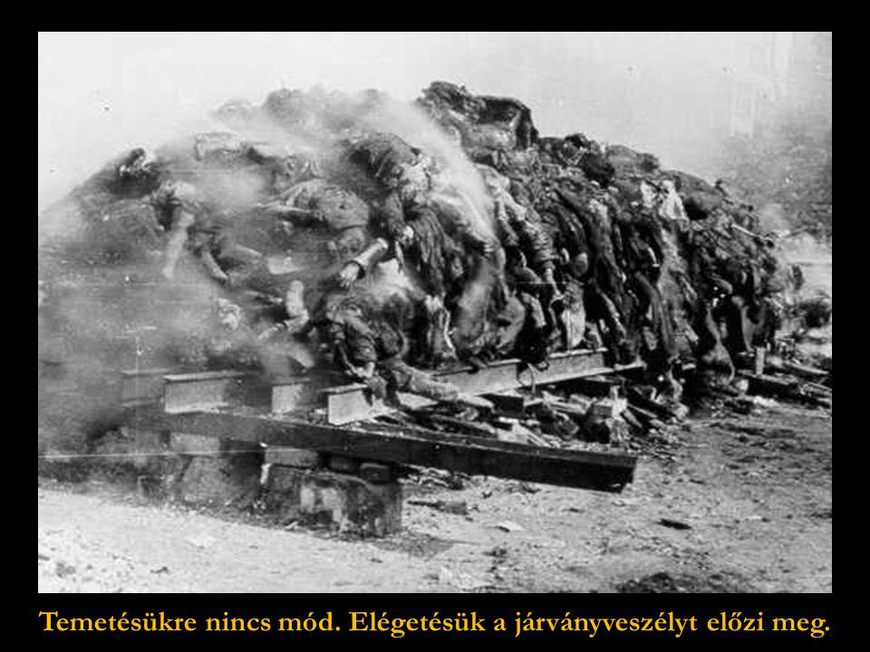 Megcsonkított, összeégett holttestek végeláthatatlan tömege …