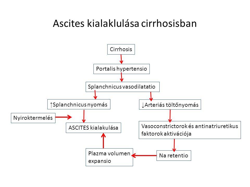 Ascites kialaklulása cirrhosisban Cirrhosis Portalis hypertensio Splanchnicus vasodilatatio ↑ Splanchnicus nyomás ↓ Arteriás töltőnyomás ASCITES kiala