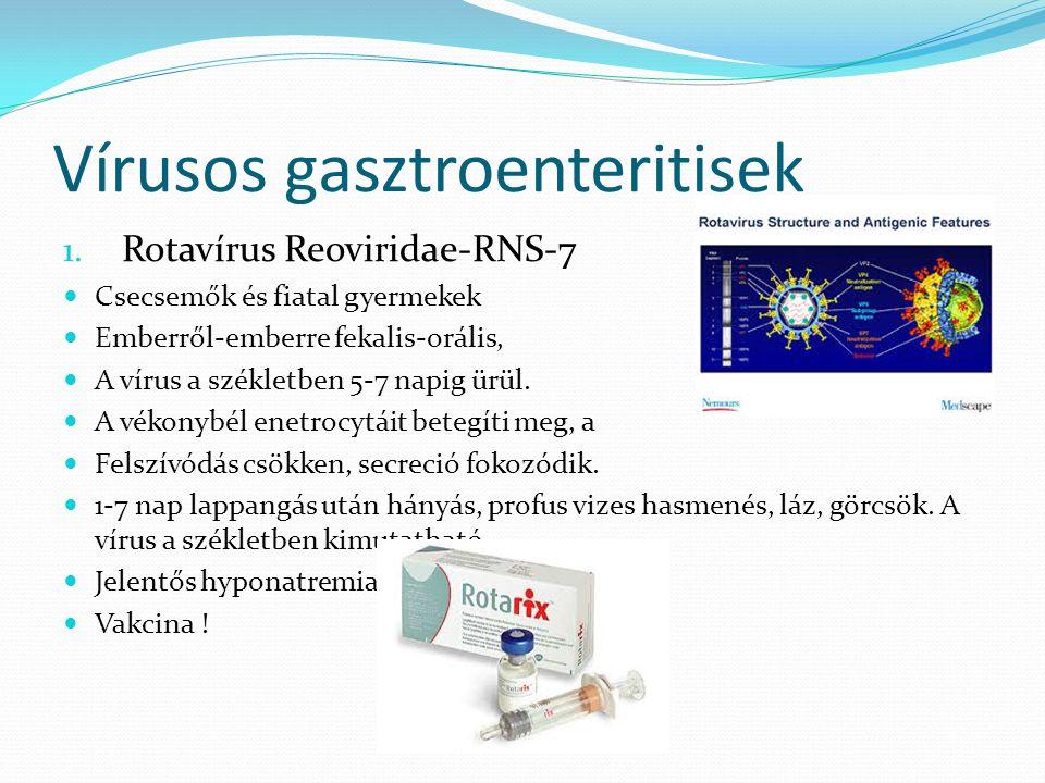 Vírusos gasztroenteritisek 1. Rotavírus Reoviridae-RNS-7 Csecsemők és fiatal gyermekek Emberről-emberre fekalis-orális, A vírus a székletben 5-7 napig