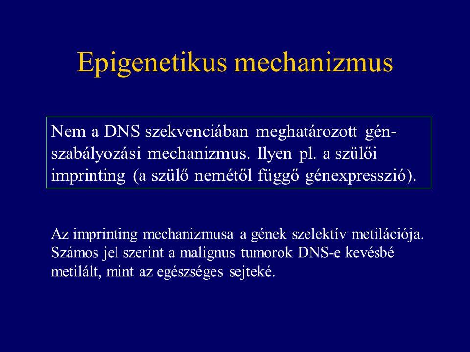 Epigenetikus mechanizmus Nem a DNS szekvenciában meghatározott gén- szabályozási mechanizmus.