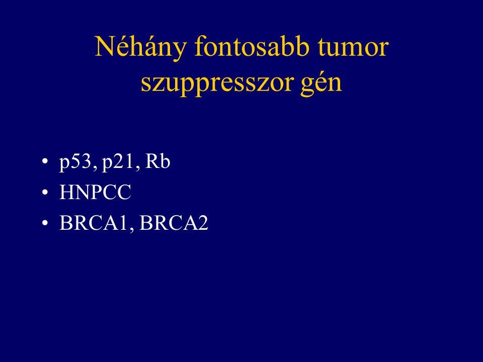 Néhány fontosabb tumor szuppresszor gén p53, p21, Rb HNPCC BRCA1, BRCA2