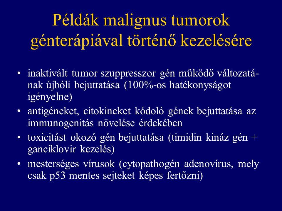 Példák malignus tumorok génterápiával történő kezelésére inaktivált tumor szuppresszor gén működő változatá- nak újbóli bejuttatása (100%-os hatékonyságot igényelne) antigéneket, citokineket kódoló gének bejuttatása az immunogenitás növelése érdekében toxicitást okozó gén bejuttatása (timidin kináz gén + ganciklovir kezelés) mesterséges vírusok (cytopathogén adenovírus, mely csak p53 mentes sejteket képes fertőzni)