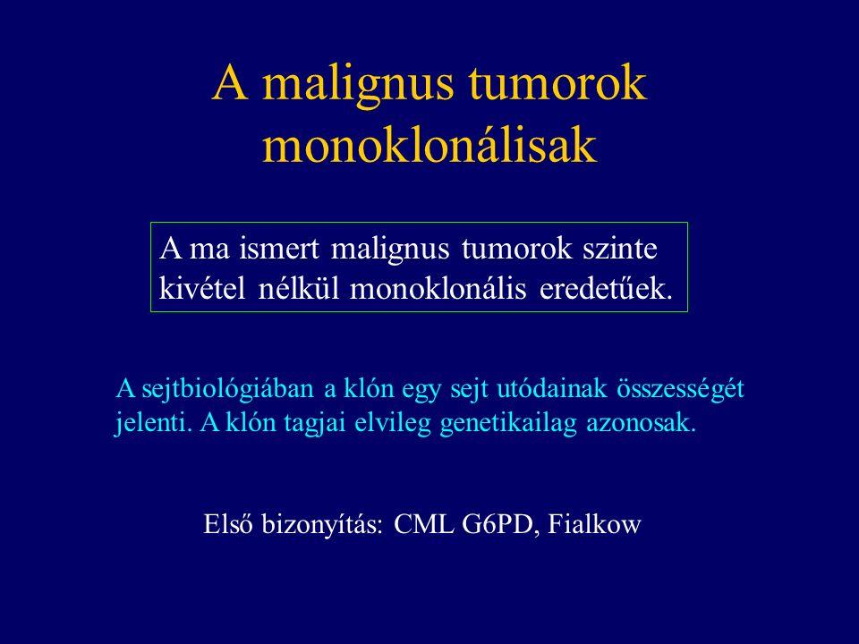 A malignus tumorok monoklonálisak A ma ismert malignus tumorok szinte kivétel nélkül monoklonális eredetűek.