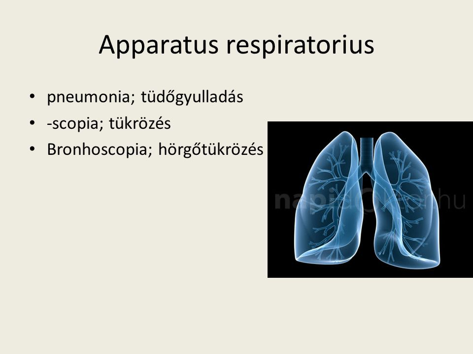 Apparatus respiratorius pneumonia; tüdőgyulladás -scopia; tükrözés Bronhoscopia; hörgőtükrözés
