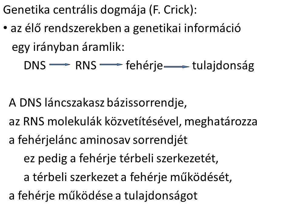 Genetika centrális dogmája (F. Crick): az élő rendszerekben a genetikai információ egy irányban áramlik: DNS RNS fehérje tulajdonság A DNS láncszakasz