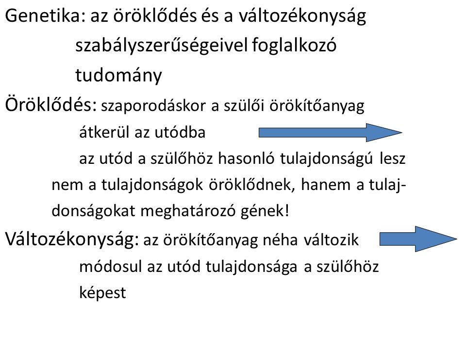 meiózis I.
