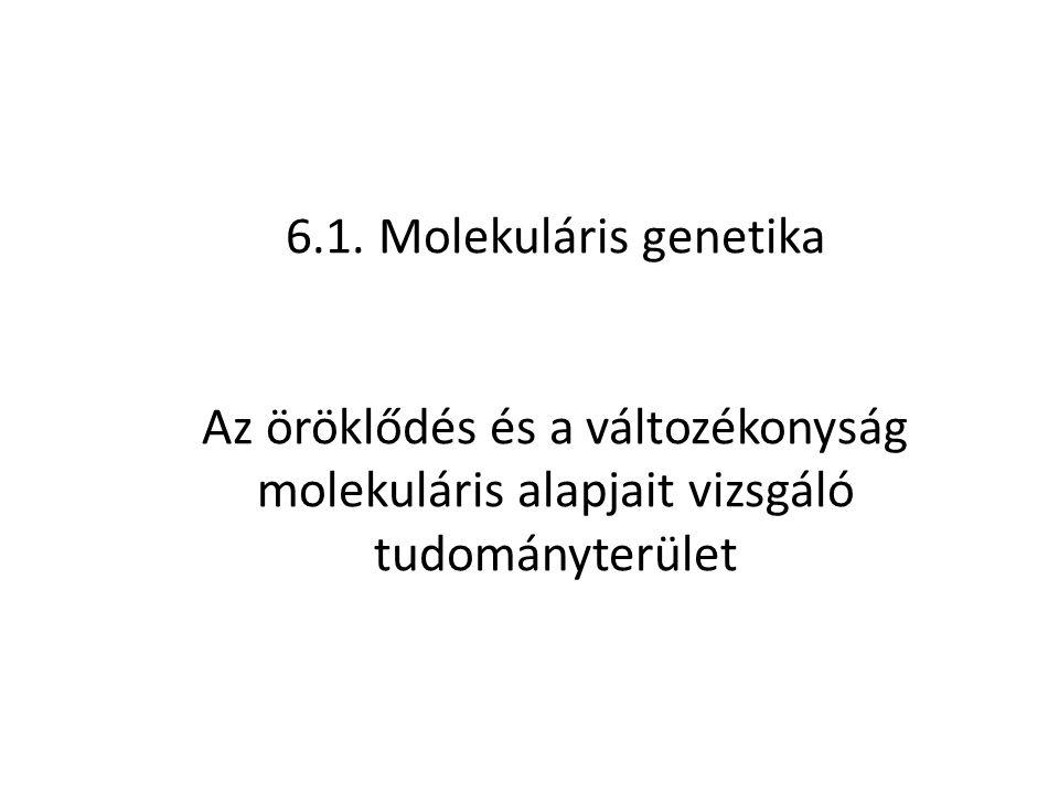 6.1. Molekuláris genetika Az öröklődés és a változékonyság molekuláris alapjait vizsgáló tudományterület