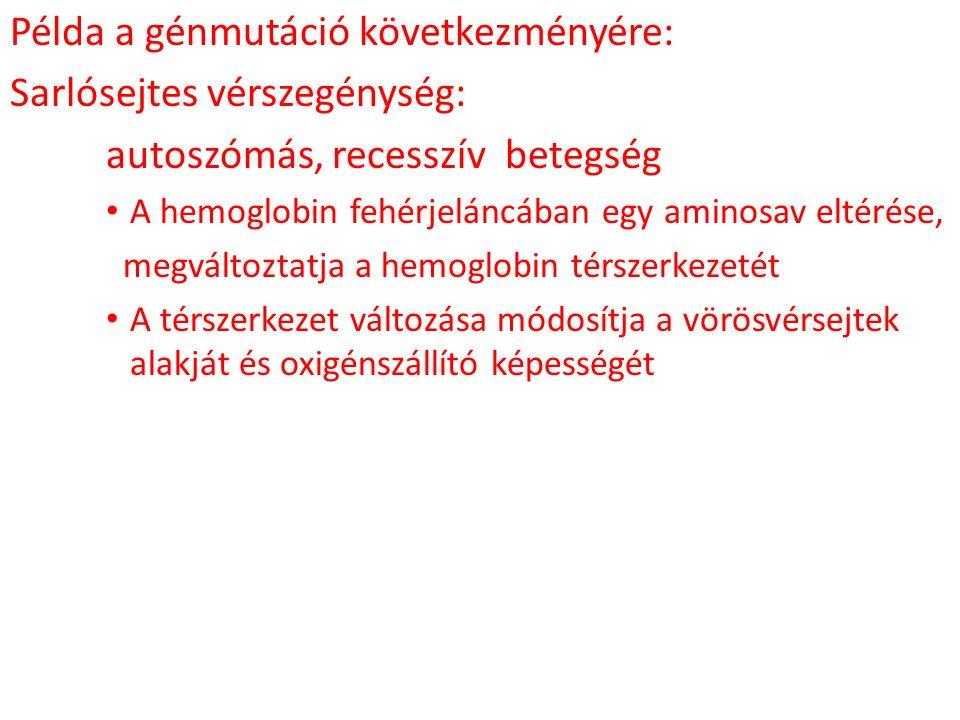 Példa a génmutáció következményére: Sarlósejtes vérszegénység: autoszómás, recesszív betegség A hemoglobin fehérjeláncában egy aminosav eltérése, megv