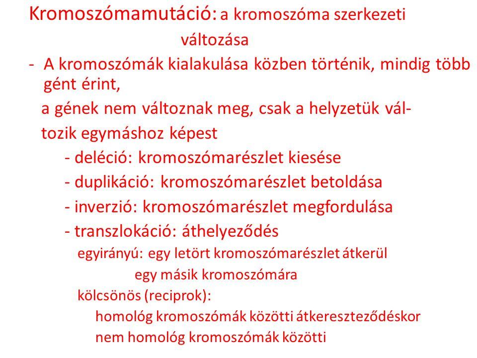 Kromoszómamutáció: a kromoszóma szerkezeti változása -A kromoszómák kialakulása közben történik, mindig több gént érint, a gének nem változnak meg, cs