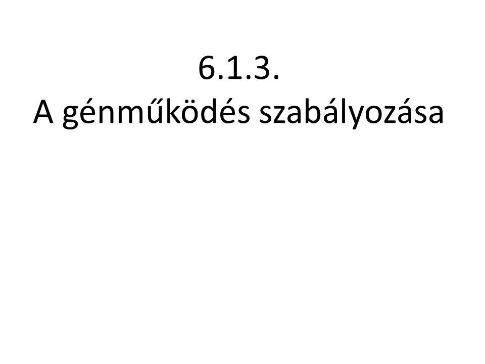 6.1.3. A génműködés szabályozása