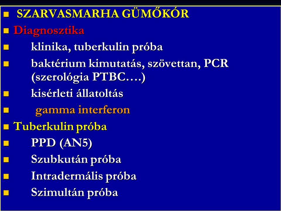 SZARVASMARHA GÜMŐKÓR SZARVASMARHA GÜMŐKÓR Diagnosztika Diagnosztika klinika, tuberkulin próba klinika, tuberkulin próba baktérium kimutatás, szövettan