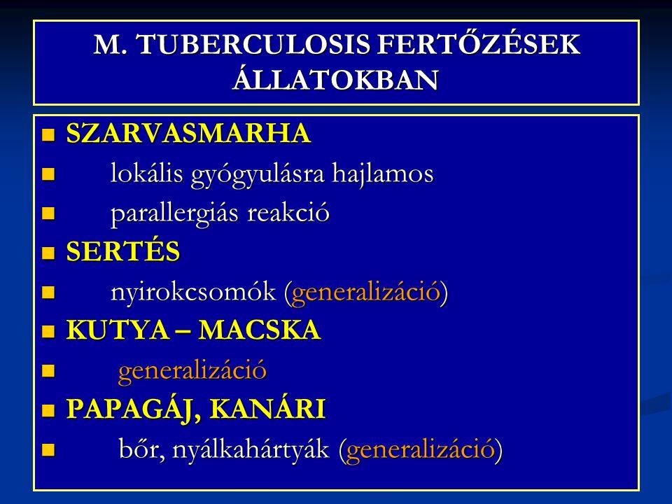 M. TUBERCULOSIS FERTŐZÉSEK ÁLLATOKBAN SZARVASMARHA SZARVASMARHA lokális gyógyulásra hajlamos lokális gyógyulásra hajlamos parallergiás reakció paralle