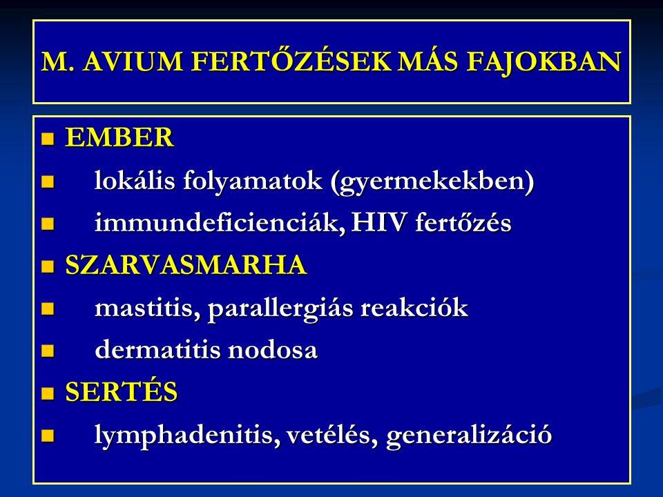 M. AVIUM FERTŐZÉSEK MÁS FAJOKBAN EMBER EMBER lokális folyamatok (gyermekekben) lokális folyamatok (gyermekekben) immundeficienciák, HIV fertőzés immun