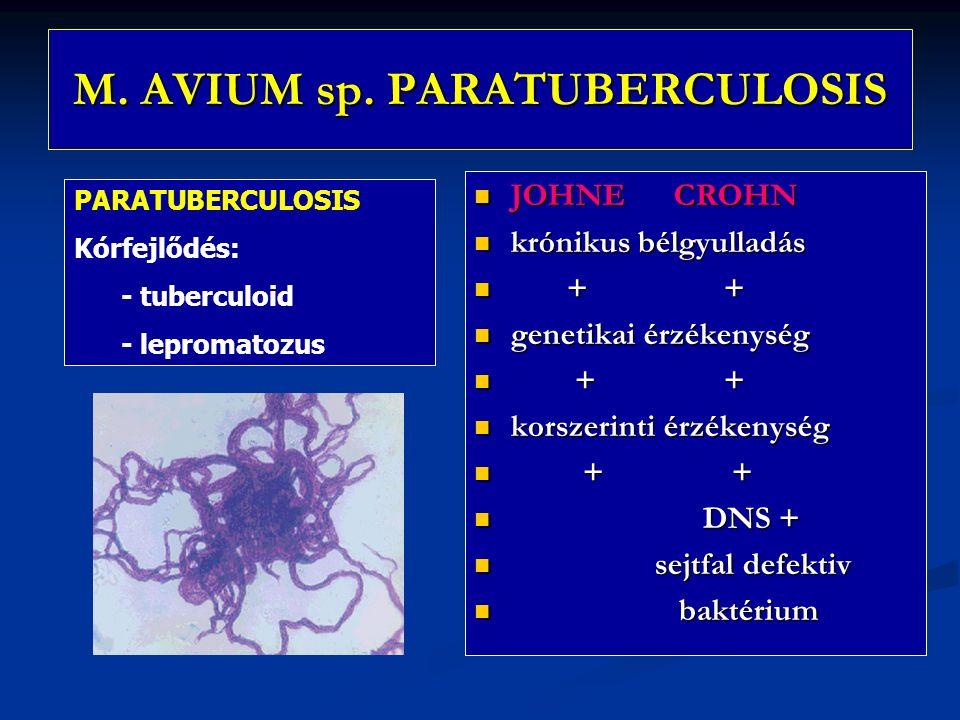 M. AVIUM sp. PARATUBERCULOSIS JOHNE CROHN krónikus bélgyulladás + genetikai érzékenység + korszerinti érzékenység + DNS + sejtfal defektiv baktérium P