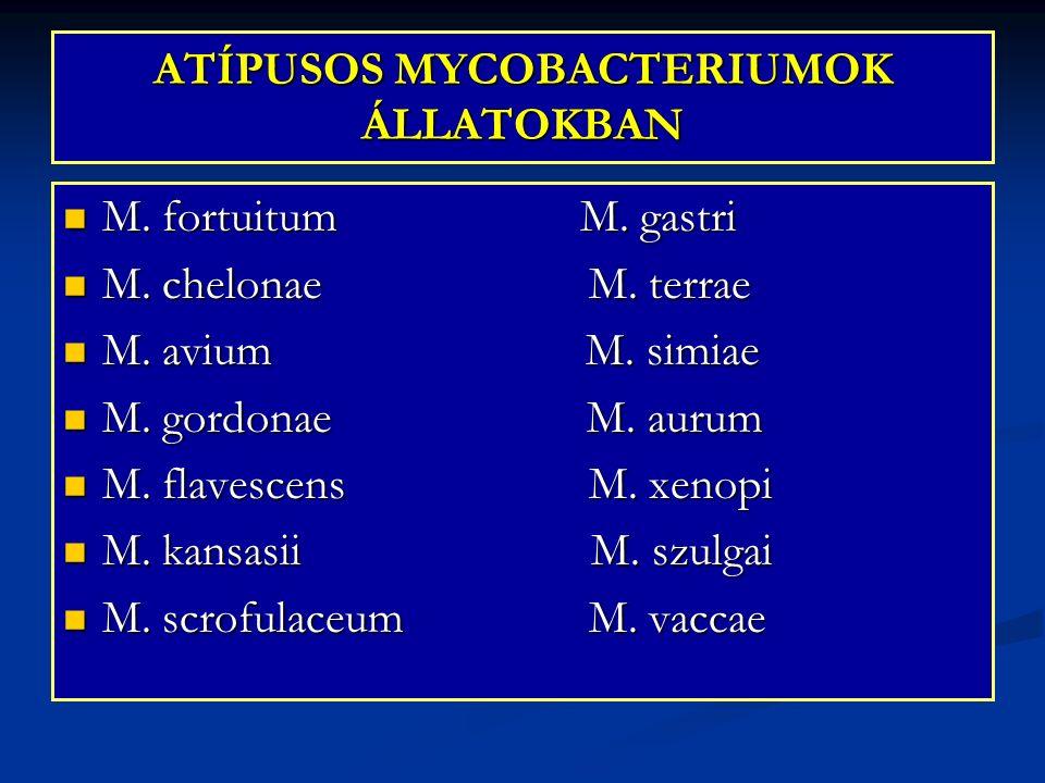 ATÍPUSOS MYCOBACTERIUMOK ÁLLATOKBAN M. fortuitum M. gastri M. fortuitum M. gastri M. chelonae M. terrae M. chelonae M. terrae M. avium M. simiae M. av