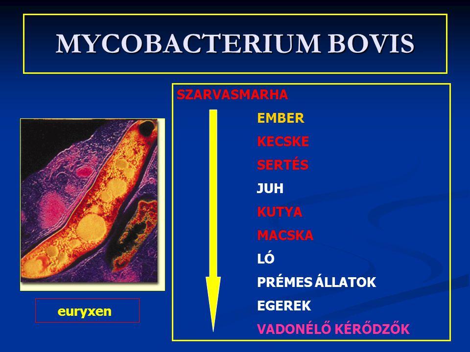 MYCOBACTERIUM BOVIS SZARVASMARHA EMBER KECSKE SERTÉS JUH KUTYA MACSKA LÓ PRÉMES ÁLLATOK EGEREK VADONÉLŐ KÉRŐDZŐK euryxen