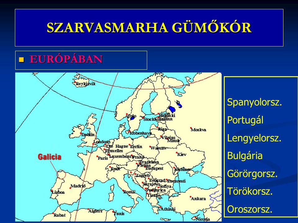SZARVASMARHA GÜMŐKÓR EURÓPÁBAN EURÓPÁBAN Spanyolorsz. Portugál Lengyelorsz. Bulgária Görörgorsz. Törökorsz. Oroszorsz.