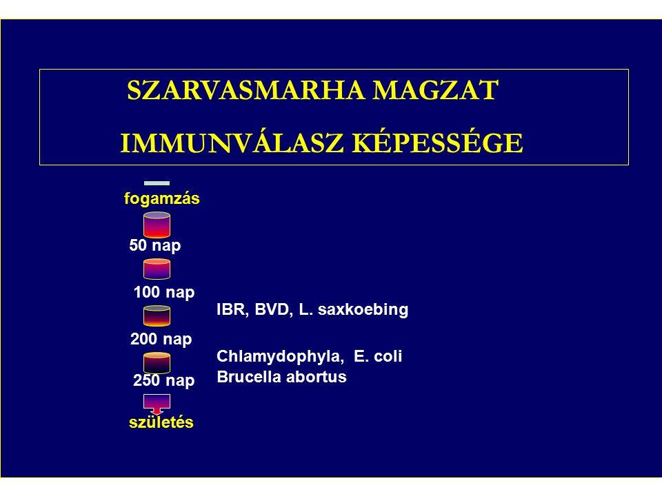 19. ábra Szarvasmarha magzat immunválasz képessége fogamzás 50 nap 100 nap 200 nap 250 nap IBR, BVD, L. saxkoebing Chlamydophyla, E. coli Brucella abo
