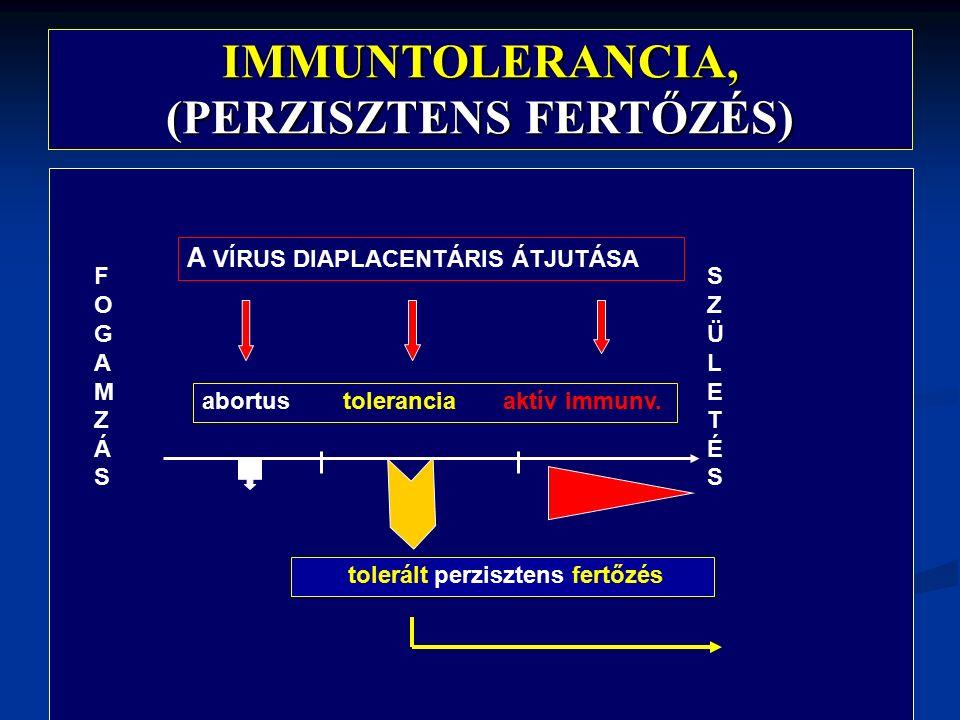 IMMUNTOLERANCIA, (PERZISZTENS FERTŐZÉS) FOGAMZÁSFOGAMZÁS SZÜLETÉSSZÜLETÉS A VÍRUS DIAPLACENTÁRIS ÁTJUTÁSA abortus tolerancia aktív immunv.