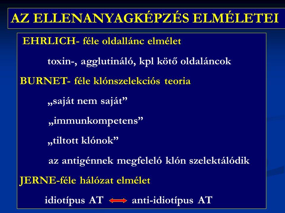 """AZ ELLENANYAGKÉPZÉS ELMÉLETEI EHRLICH- féle oldallánc elmélet toxin-, agglutináló, kpl kötő oldaláncok BURNET- féle klónszelekciós teoria """"saját nem saját """"immunkompetens """"tiltott klónok az antigénnek megfeleló klón szelektálódik JERNE-féle hálózat elmélet idiotípus AT anti-idiotípus AT"""