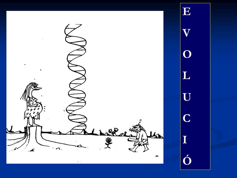 EVOLUCIÓEVOLUCIÓ