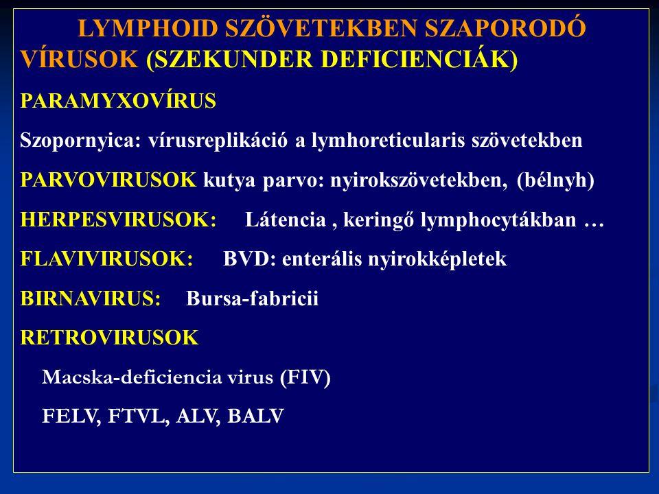 LYMPHOID SZÖVETEKBEN SZAPORODÓ VÍRUSOK (SZEKUNDER DEFICIENCIÁK) PARAMYXOVÍRUS Szopornyica: vírusreplikáció a lymhoreticularis szövetekben PARVOVIRUSOK kutya parvo: nyirokszövetekben, (bélnyh) HERPESVIRUSOK: Látencia, keringő lymphocytákban … FLAVIVIRUSOK: BVD: enterális nyirokképletek BIRNAVIRUS: Bursa-fabricii RETROVIRUSOK Macska-deficiencia virus (FIV) FELV, FTVL, ALV, BALV