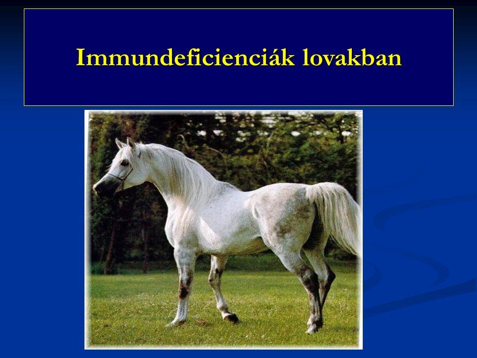 Immundeficienciák lovakban