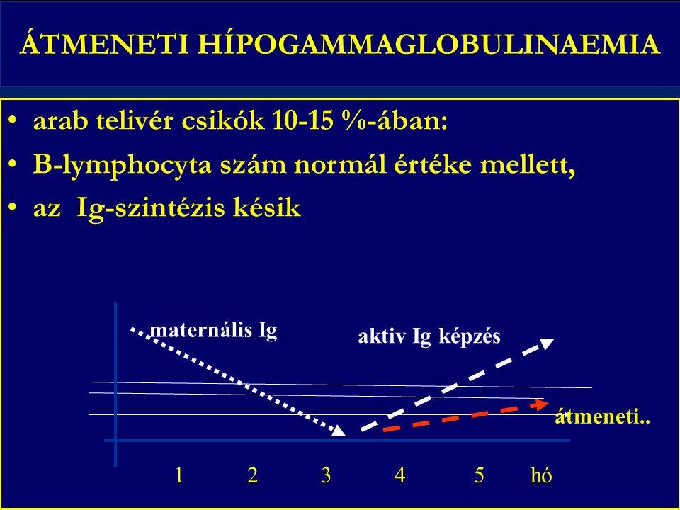 ÁTMENETI HÍPOGAMMAGLOBULINAEMIA arab telivér csikók 10-15 %-ában: B-lymphocyta szám normál értéke mellett, az Ig-szintézis késik 1 2 3 4 5 hó maternális Ig aktiv Ig képzés átmeneti..