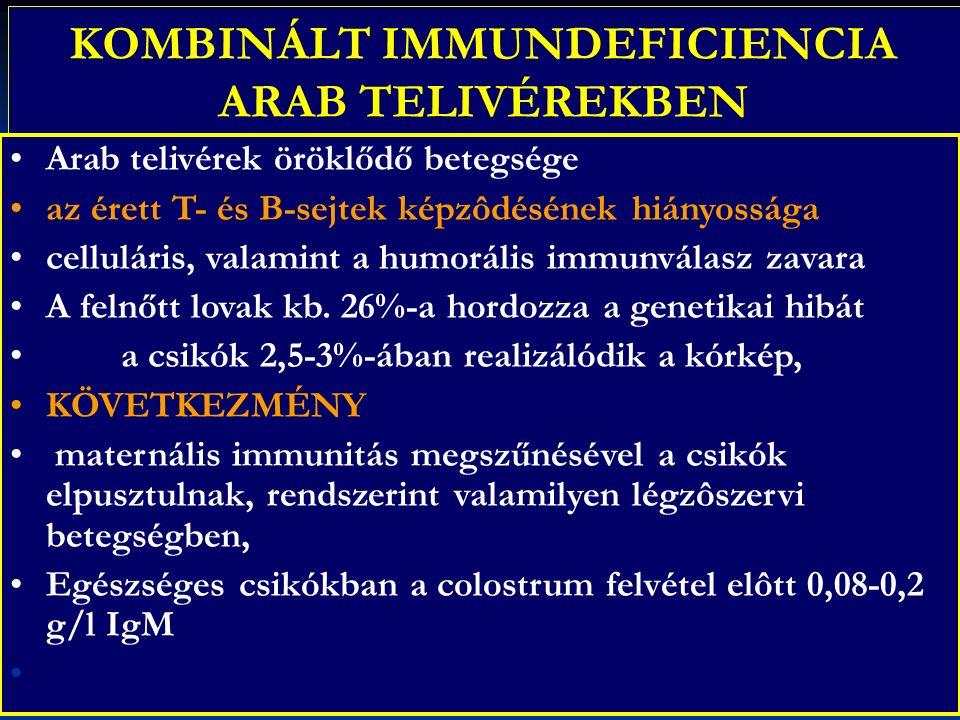 KOMBINÁLT IMMUNDEFICIENCIA ARAB TELIVÉREKBEN Arab telivérek öröklődő betegsége az érett T- és B-sejtek képzôdésének hiányossága celluláris, valamint a humorális immunválasz zavara A felnőtt lovak kb.