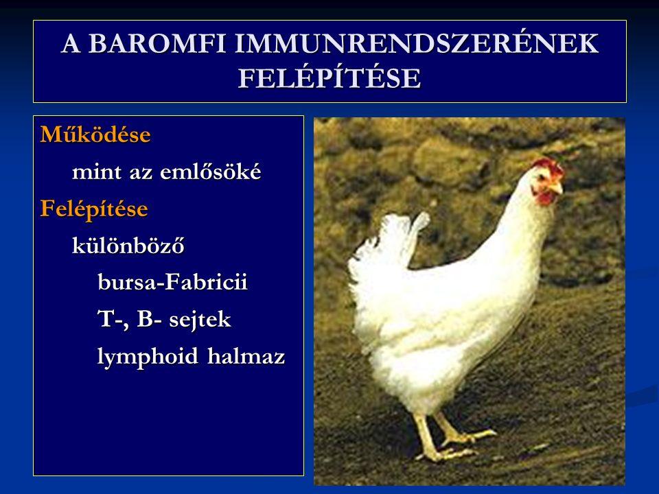 A BAROMFI IMMUNRENDSZERÉNEK FELÉPÍTÉSE Működése mint az emlősöké mint az emlősökéFelépítése különböző különböző bursa-Fabricii bursa-Fabricii T-, B- sejtek T-, B- sejtek lymphoid halmaz lymphoid halmaz