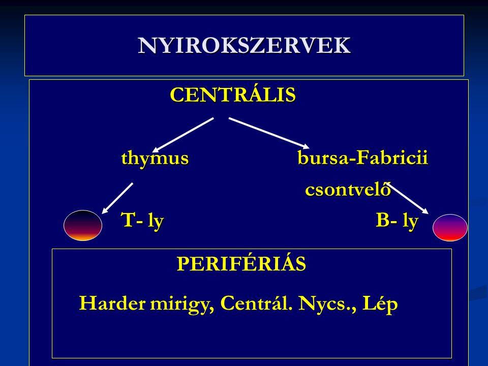 NYIROKSZERVEK CENTRÁLIS CENTRÁLIS thymus bursa-Fabricii thymus bursa-Fabricii csontvelő csontvelő T- ly B- ly T- ly B- ly PERIFÉRIÁS Harder mirigy, Centrál.